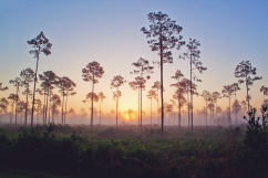 Highlands Hammock_contest_Candice Smith_Sunrise Over Highlands 1