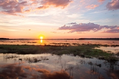 Myakka River_contest_Candice Smith_Myakke Sunset